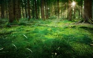 Fairytale Forest - Sunburst