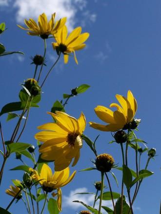 backlit-flowers-1183534
